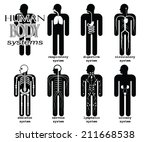 human body systems  pictogram ...