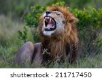 Roaring Lion Ron  Son Of...