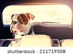 Happy Dog Traveling In The Car...