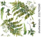 watercolor set of forest herbs... | Shutterstock . vector #211742260
