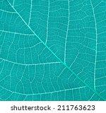 blue leaf | Shutterstock . vector #211763623