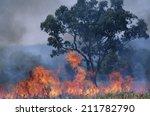 australia bush fire | Shutterstock . vector #211782790