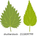 green leaf of nettle | Shutterstock .eps vector #211839799