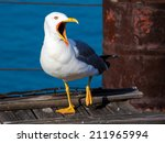 Funny Angry Seagull With Big...