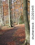 late autumn woodland scene in... | Shutterstock . vector #21201445