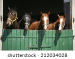 nice thoroughbred foals in the... | Shutterstock . vector #212034028