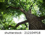 forest trees nature green wood... | Shutterstock . vector #212104918