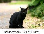Stock photo thai black cat sitting 212113894
