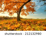 autumn scenery with dry leaves... | Shutterstock . vector #212132980