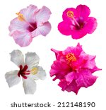Isolates Of The Four Hibiscus...