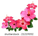Pink And Red Hibiscus Flowers...