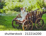 Dog In A Cart On The Nature ...