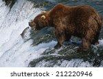 Usa  Alaska  Katmai National...