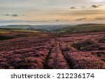 Purple Heather In The Peak...