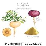 maca peruvian superfood. roots... | Shutterstock .eps vector #212282293