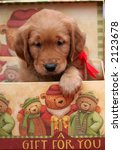 adorable golden retriever puppy in holiday gift box - stock photo