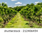 Southern Maryland Peach Orchar...