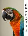portrait of parrot | Shutterstock . vector #212419270