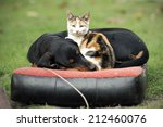 Stock photo cat and dog lying together 212460076
