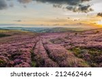 Purple Heather In The Peak...