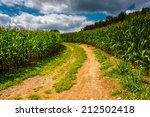 Dirt Road Through A Cornfield...