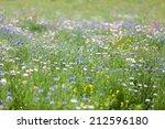 flower meadow | Shutterstock . vector #212596180