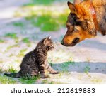 Stock photo big dog and little kitten looking at each other 212619883