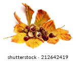 Brown Chestnut Nut With Autumn...