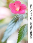 Small photo of flowers and leaves achimenes. Shallow depth of field
