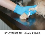 bled from the paw of the animal ... | Shutterstock . vector #212714686