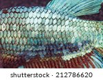 super close up to skin and tail ... | Shutterstock . vector #212786620