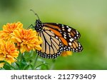Monarch Butterfly  Danaus...
