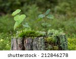 Closeup Of Two Small Saplings ...
