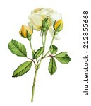yellow roses flower  botanical... | Shutterstock . vector #212855668