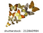 many different butterflies... | Shutterstock . vector #212860984