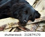 Lonely Black Dog With Sad Eyes...