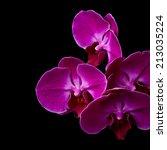 purple orchid flowers over... | Shutterstock . vector #213035224