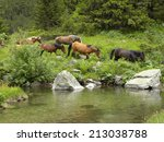 Horse Herd By A Mountain River...