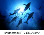a diver with a pod of humpback... | Shutterstock . vector #213109390