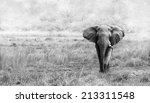 elephant in black and white | Shutterstock . vector #213311548