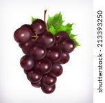 bunch of grapes  vector... | Shutterstock .eps vector #213393250