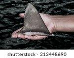 shark fin in hand | Shutterstock . vector #213448690