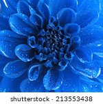 Beautiful Blue Flower Close Up