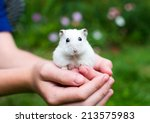 Stock photo white hamster with black eyes sitting in the children s hands and looking into the camera with a 213575983