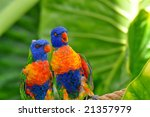 rainbow lorikeet amazement | Shutterstock . vector #21357979