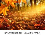 intense  warm sunrays... | Shutterstock . vector #213597964