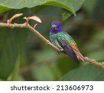 a beautiful colorful...   Shutterstock . vector #213606973