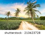 coconut tree and pineapple in... | Shutterstock . vector #213623728