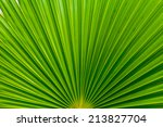 palm leafs with radial pattern | Shutterstock . vector #213827704