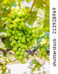bunch of grapes with green...   Shutterstock . vector #213928969